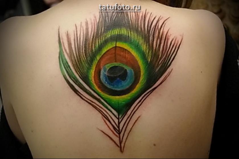 Перо павлина на всю спину - татуировка