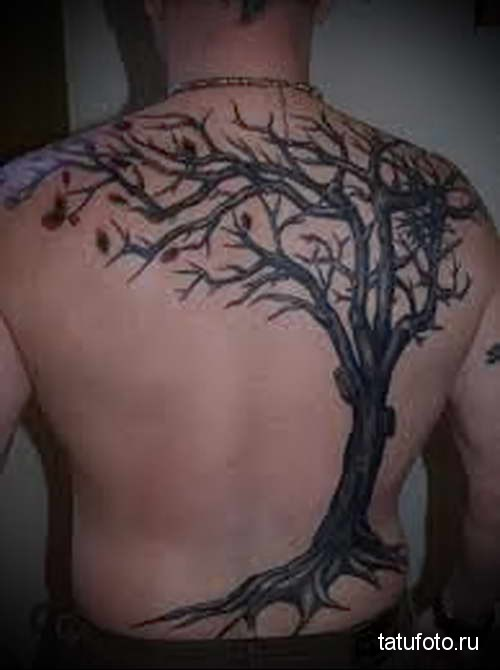 голое дерево - тату мужская на спине фото