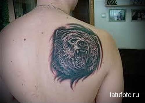 оскал дикого медведя - тату мужская на спине фото