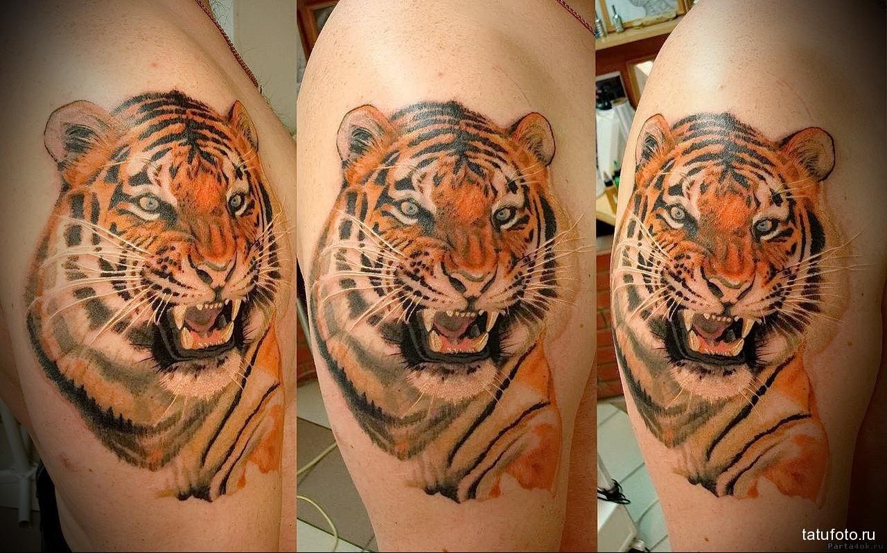 реалистичная тату с тигром - мужская татуировка на плече