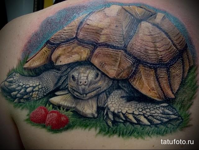 татуировка черепаха и клубника на лопатке