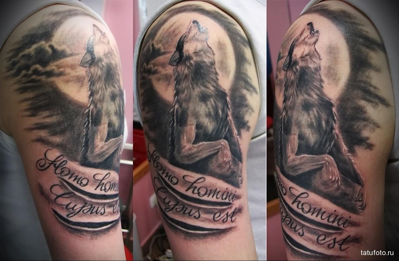 тату волк воющий на луну и надписи - мужская татуировка на плече