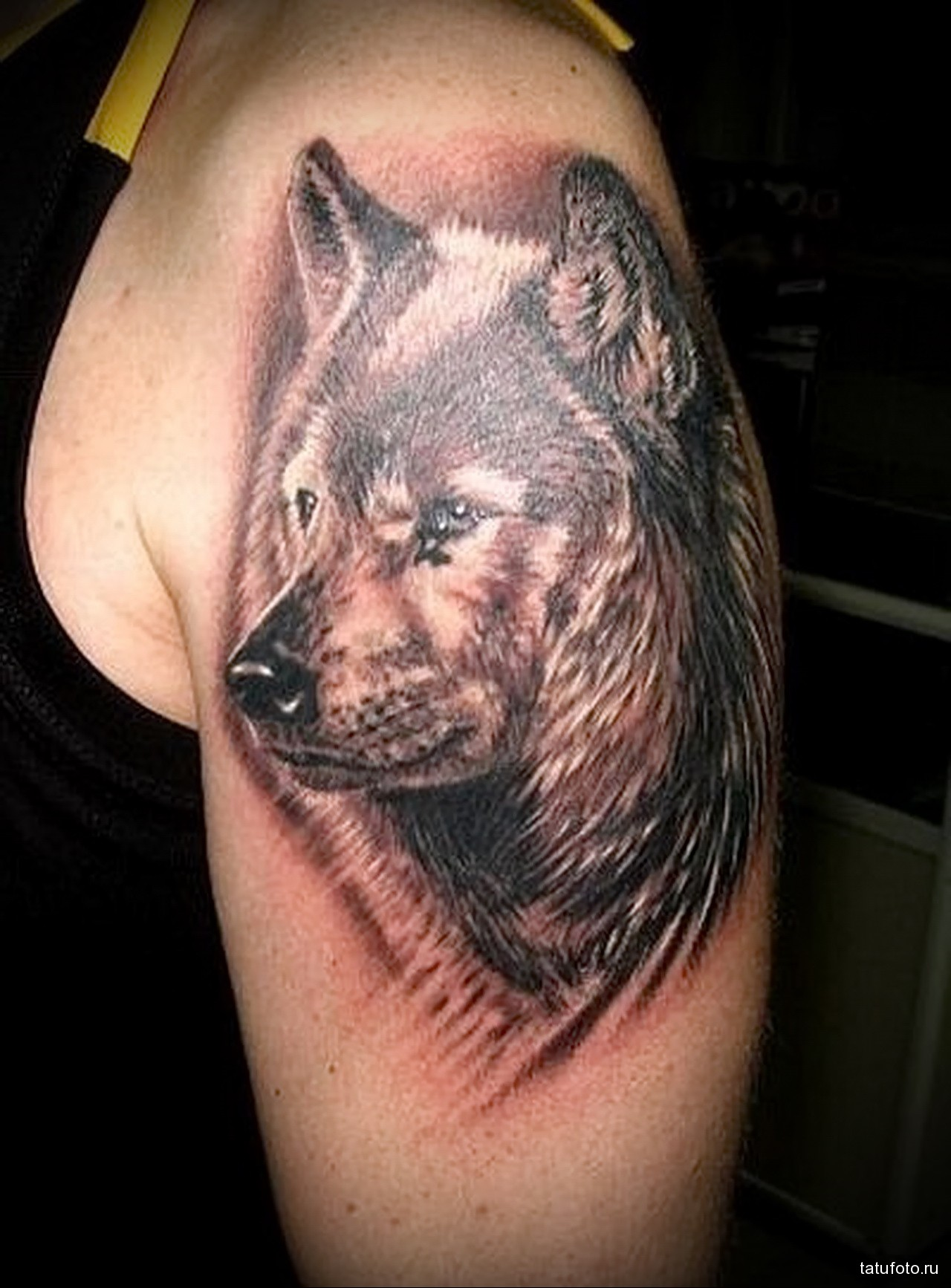 тату морда волка - мужская татуировка на плече