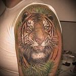 тату тигр в зарослях - мужская татуировка на плече
