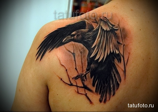 черный ворон в классной тату на лопатке парня