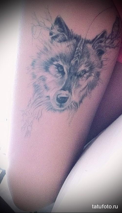 тату морда волка на ногу для девушки