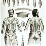Полинезия тату эскизы 2