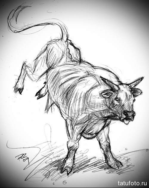 бык бьет копытами - Тату быка эскиз