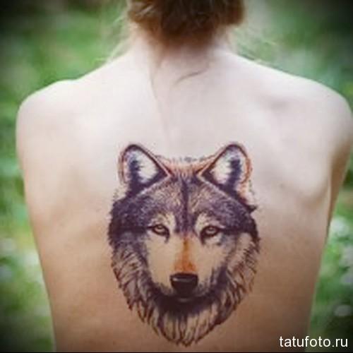 тату волка на спине 4