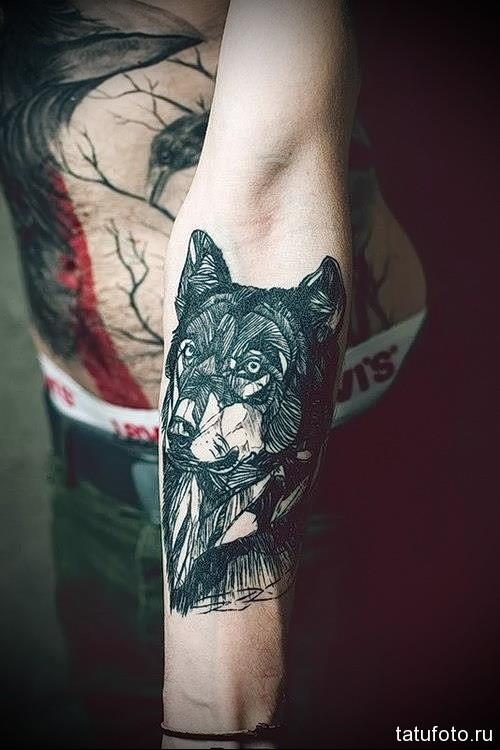 тату волк на предплечье 1