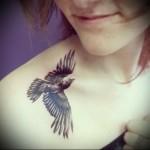 тату ворон черного цвета на плече девушки