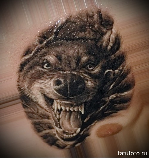 тату оскал волка 1