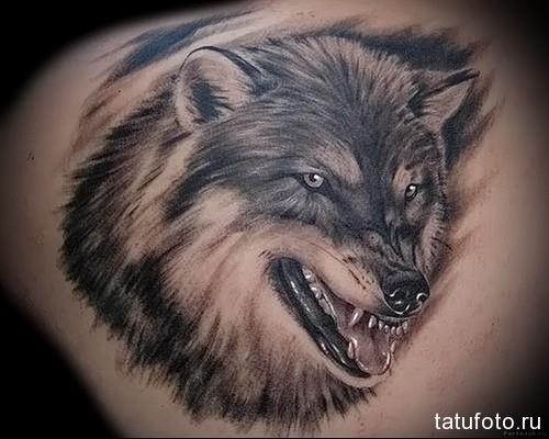 тату фото человек человеку волк