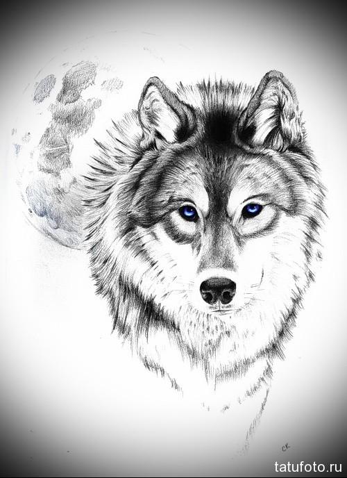 эскиз тату волк с голубыми глазами