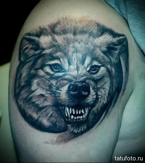 оскал волка фото тату 3