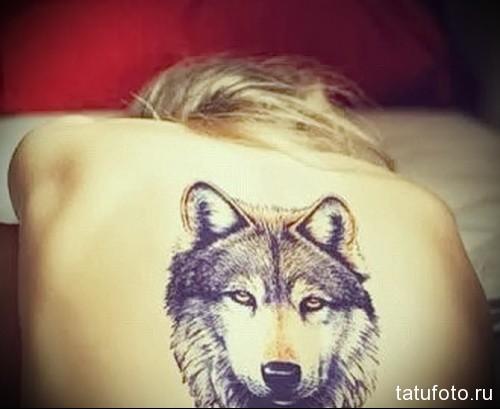 тату белый волк 3