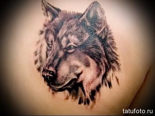 тату волка на спине 5