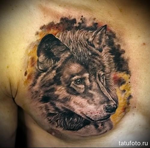 тату волк на груди 4