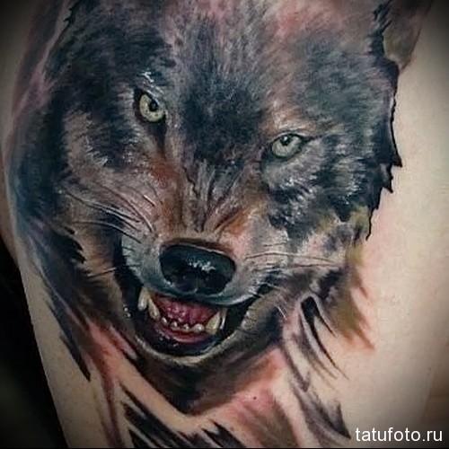 тату оскал волка 3