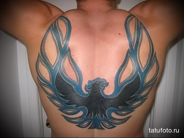 жар птица тату синего цвета на спине