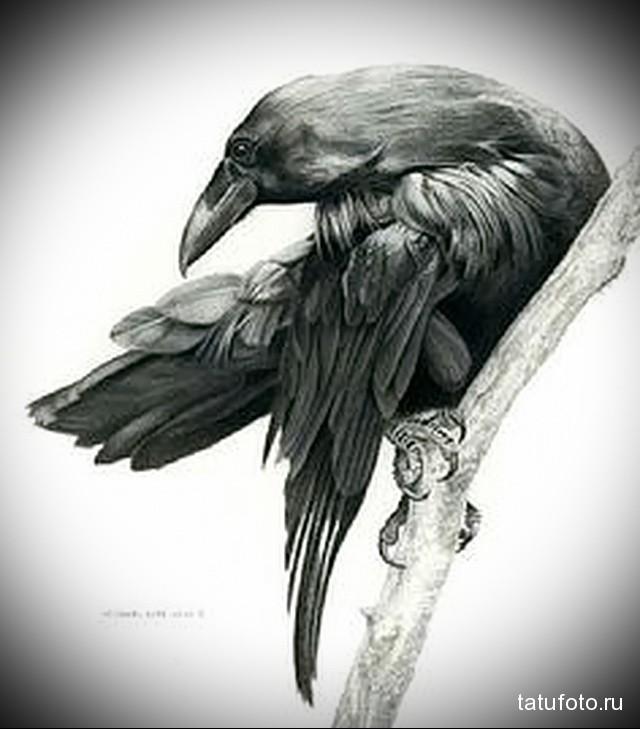 эскиз черный ворон тату 1