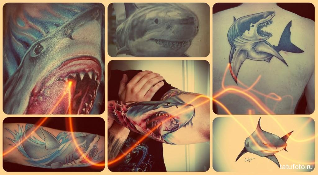 Значение тату акула