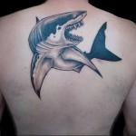 Значение тату акула 5