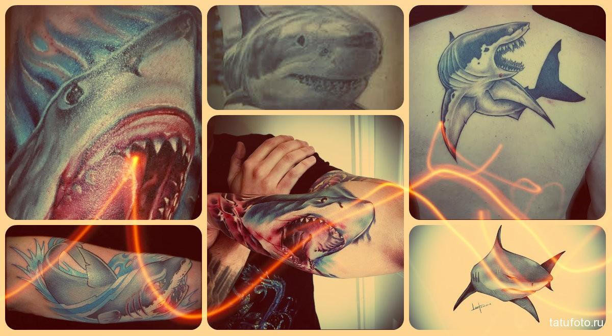 Значение тату акула - готовые примеры на фото
