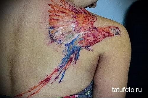 попугай ара - тату акварель фото
