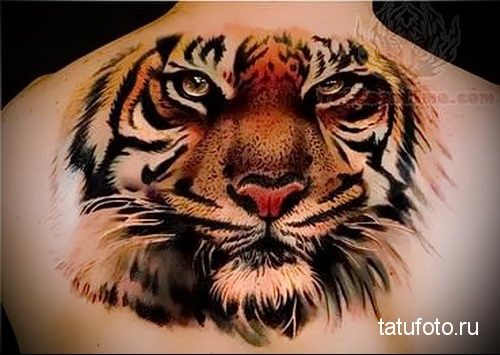 тату голова тигра - новая татуировка на спине