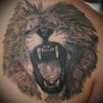 тату лев на спине - оскал