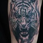 тату оскал тигра на руку