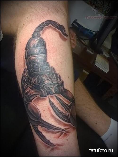 тату скорпион на ноге фото 2