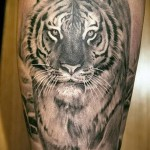 тату тигра на плече - величественный вариант