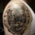 тату тигра на плече - классика на фото