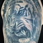 тату тигра на плече с длинными клыками