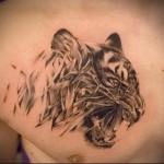 тату тигр на грудине мужские - нападает из травы