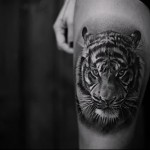 тату тигр на ноге выше колена