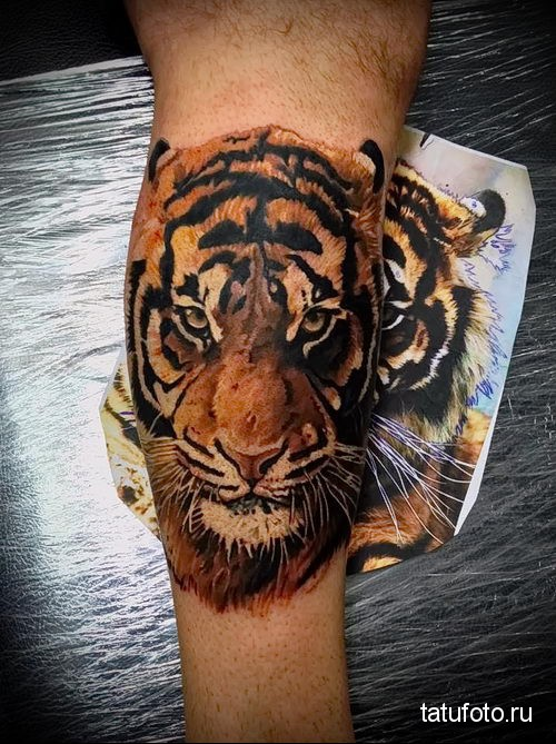Фото эскиз тату тигра 124