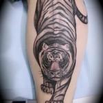 тату тигр на ноге у парня