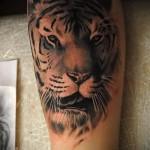 тату тигр на руке - реалистическая работа
