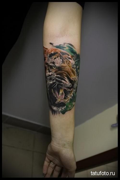 тату тигр на руке - цветная татуировка на фото