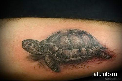 тату морская черепаха 19