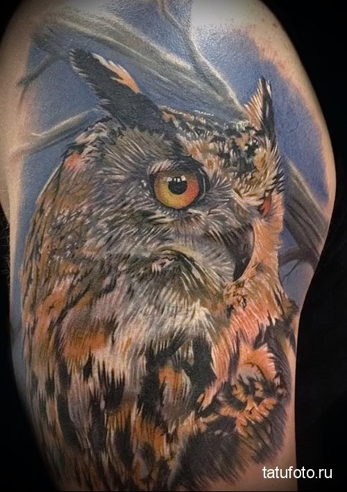 owl tattoo on his shoulder 2