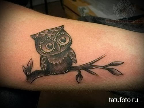 tattoo owl on a branch 1