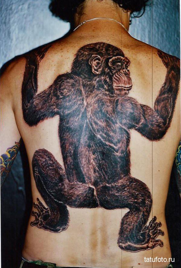 Тату обезьяна на всю спину