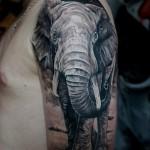 Тату слон на плече и руке для парня