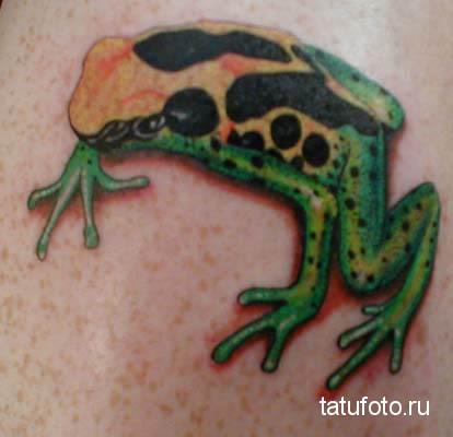 Тату лягушка с оранжевой спиной