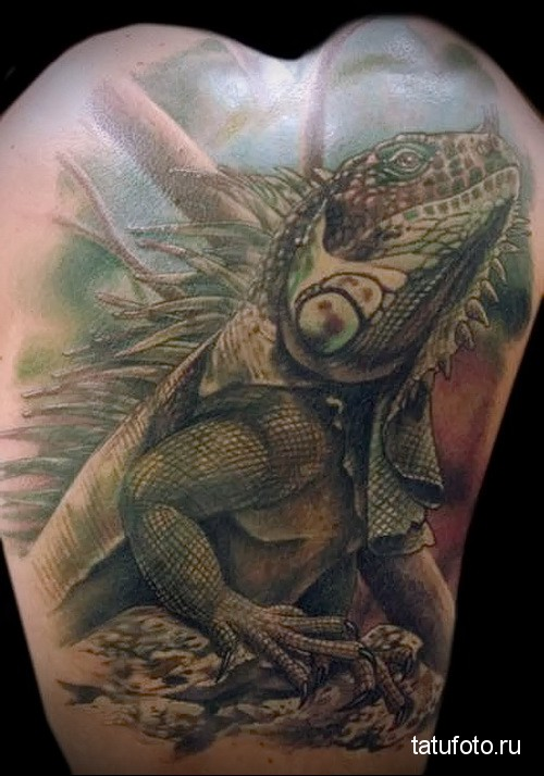 Reptiles in the tattoo 11