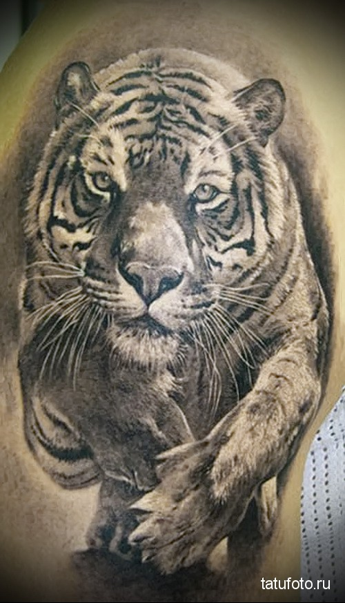 Tattoo animal predators 3к 234 341 235